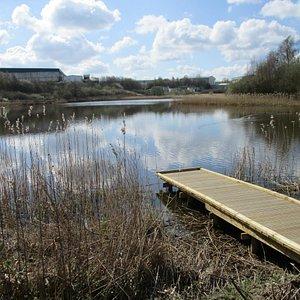 Wetland in an industrial landscape