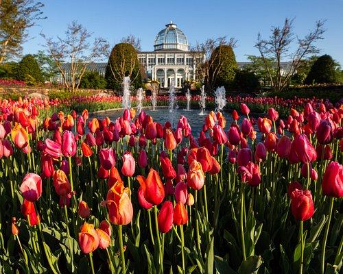 A Million Blooms. Image by Sarah Hauser, Virginia Tourism Corporation