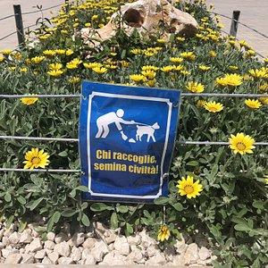 Un monito per i proprietari dei cani 🐕 🐕🐕🐕🐕🐕🐕🐕🐕🐕🐕🐕🐕