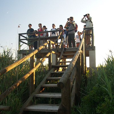 Do you wish to know the birds and wildlife of Mallorca? Come on one of our tours to live an unforgettable  experience!!