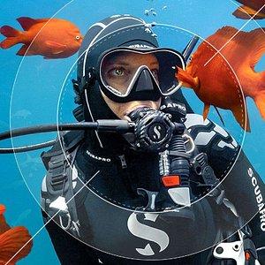 Florida Keys Dive Center Scuba Diving Charters, Scuba Instruction, Spearfishing, Snorkeling