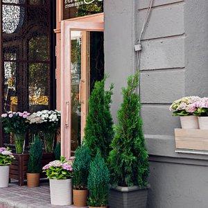 Красивая цветочная витрина в центре города