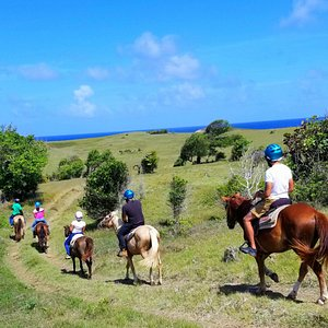 Horses approaching the Atlantic coastline in Saint Lucia. Magical days in the saddle with our beautiful horses
