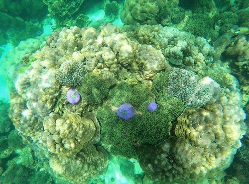 บริเวณรอบเกาะนี้ท่านจะเห็นปะการัง 7 สีได้บริเวณที่มีปะการังชนิดนี้ก็คือ จุดดำน้ำตื้นบริเวณ ร่องน้ำจาบัง , เกาะหินซ้อน และ เกาะผึ้ง)และจะได้เห็นปะการังโขด,ปะการังโต๊ะ,ปะการังเขากวางพุ่ม ฯลฯ และฝูงปลาที่ยังคงอุดมสมบูรณ์ครับ