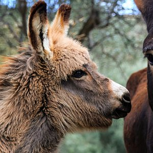 They have baby donkeys too (May 2021)