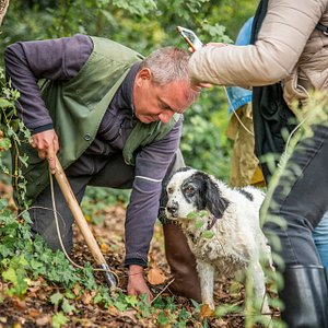 Esperienza di caccia al tartufo in Toscana -  Truffle hunting experience in Tuscany