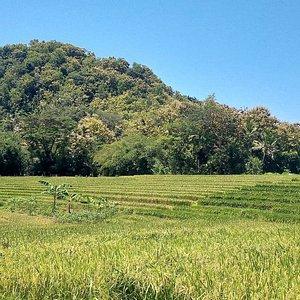Gunung Mujil or Gunung Kombang