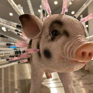 Exponat: Antibiotika Schwein ©DFM_Berlin