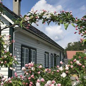 Juni og eplebløming - klart for Sommarutstilling Apple blossoming in June