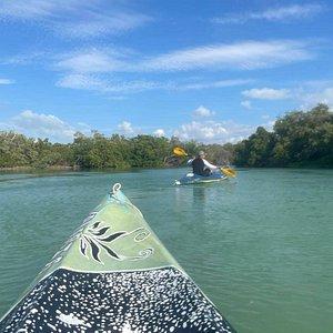 Enjoying kayaking in the mangroves