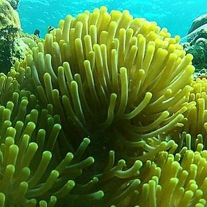 Corals along the marine ecosystems