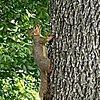 MooseNSquirrel