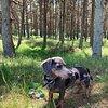 Petite Paws Dog Walking Musselburgh