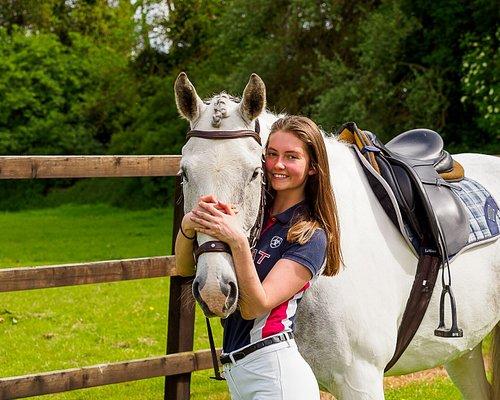 Livery Horses