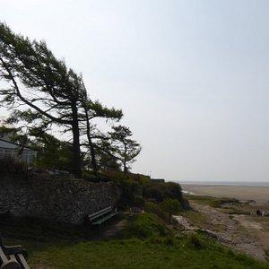 Wind swept shore line