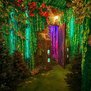 Enchanted forest welcomes you