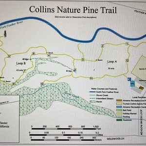 Map of the walking trails at the Collins Nature Pine Trail