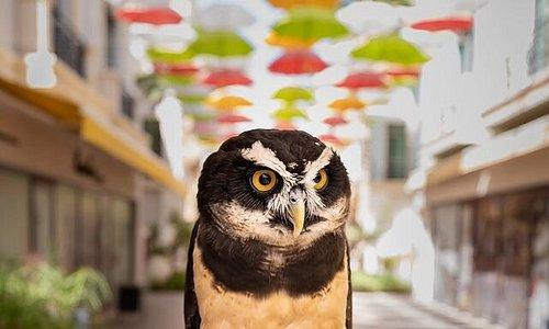 Бывали ли Вы когда-нибудь в совином кафе?  Cамые мудрые жители Абу-Даби ждут Вашего визита -  каждая из них имеет свой характер, темперамент и может стать отличным компаньоном на время Вашего отдыха!  IG@boomah