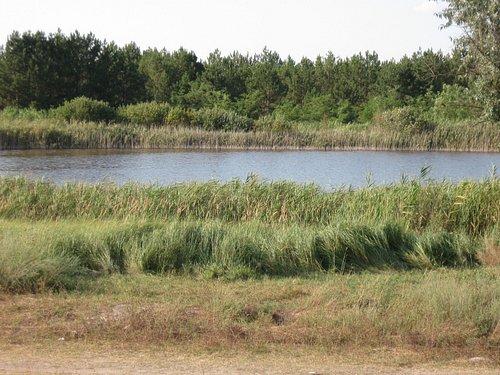 Прищуковое йодистое озеро