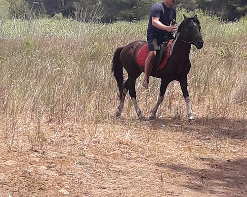 You ride a horse and you see  a lot of wild life and take woderful photos
