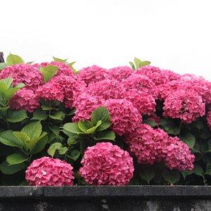 Parte florida de un jardín.