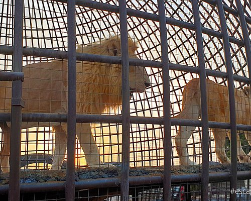 The zoo wild life park