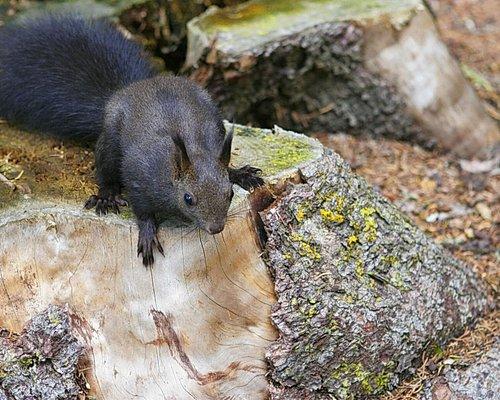Eichhörnchenwald Lenzerheide