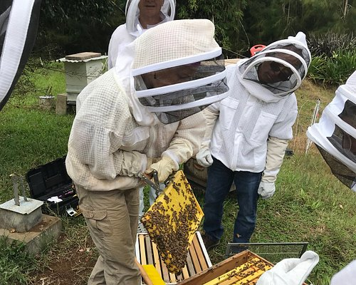 Up close with the bees