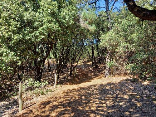 Forêt au calme, à l'ombre principalement.