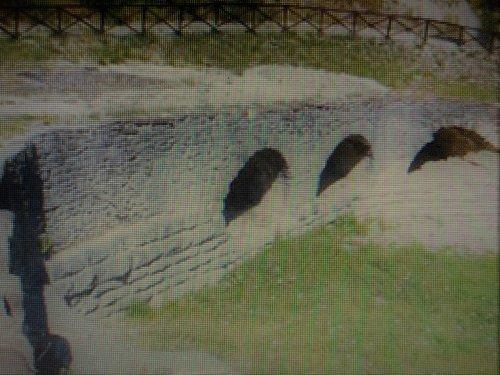 Il ponte di oltre 2000 anni...i Romani insegnano...