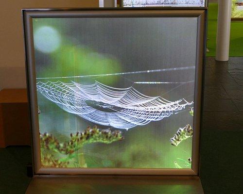 Blick von vorne zeigt ein tolles großes Spinnennetz