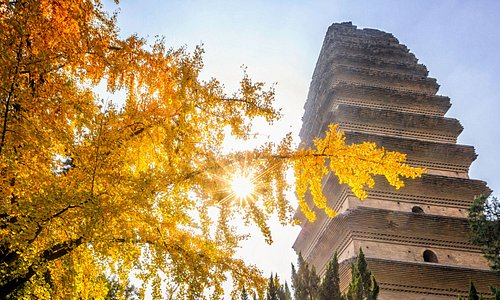 Xi'an's autumn is golden. Take a walk under the tower, you will feel the culture from thousands of years ago.
