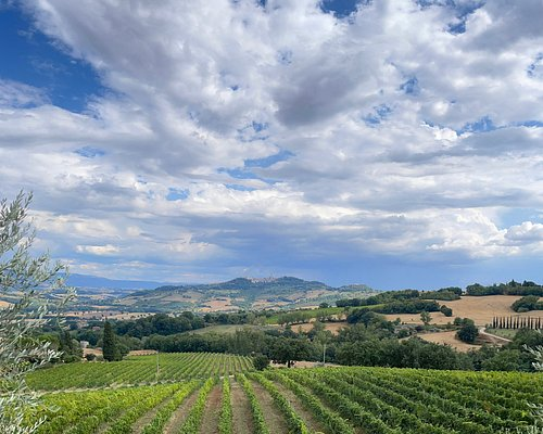 Visiting the vineyard and olive grove