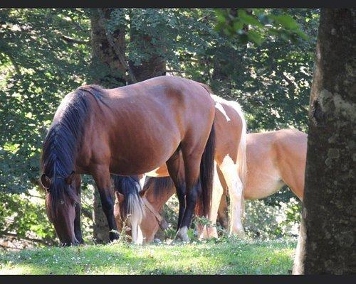 Horses in Valivona