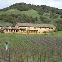 Vineyards at Nicholsen Ranch