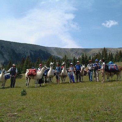 The llamas and us
