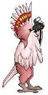 Tikibird