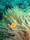 boxfish70