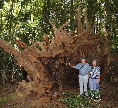 Look at the size of this stump!
