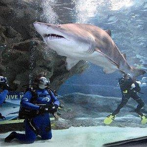 Sharks at Blue Planet Aquarium
