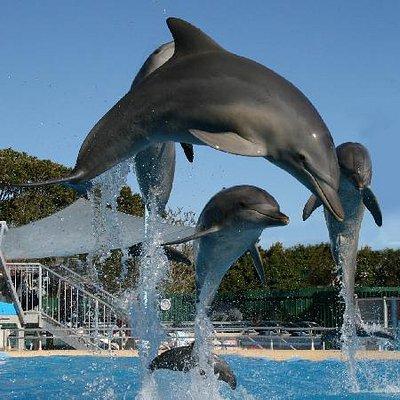 Marine Magic - Leaping dolphins