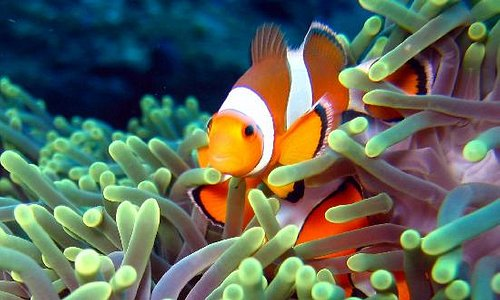 We will find you Nemo