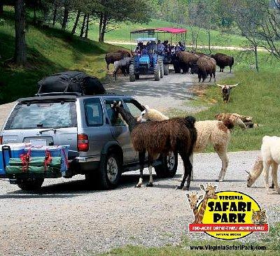 Virginia Safari Park - Virginia's Only Drive-Thru Zoo!