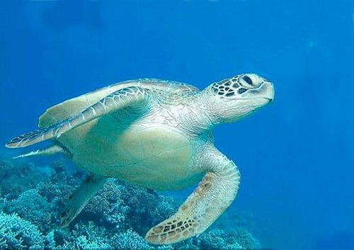 We Love Turtles!!