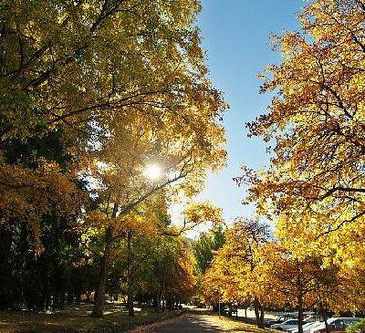 色づいた木々が美しい