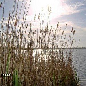 Marsh area at sunset