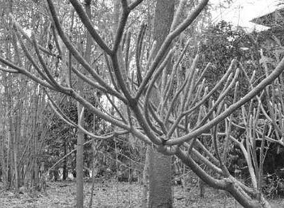 The Huddleston Gardens of Theosophical Society