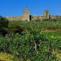Monterriggioni vinyards and walls