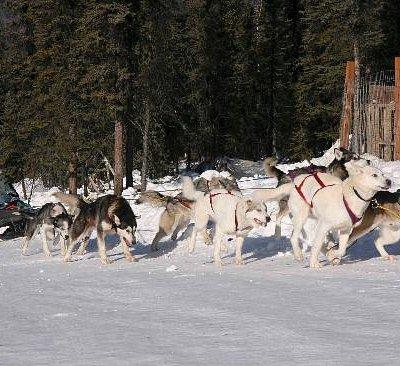 Winter Dog Sled Ride