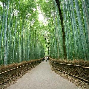 Kyoto's Arashiyama Bamboo Grove